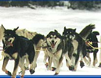 Dog Sledding Minnesota